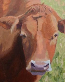 Margaret Crutchley  French Cow  Original Animal Portrait