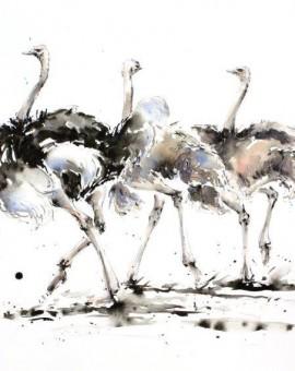 A Trio of Ostrich    (62cm x 44cm)    Watercolour & Ink   £1,150