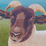 Margaret Crutchley Norfolk Horn Sheep Wychwood Art.jpeg