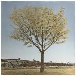 Anna Harley Gold Leaf Wychwood Art