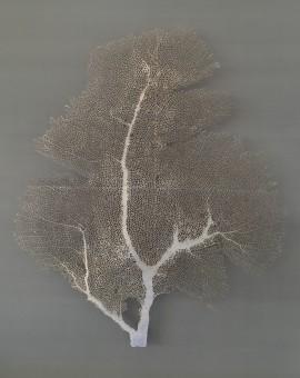 seafan-silver-grey-emma-levine-wychwood-art