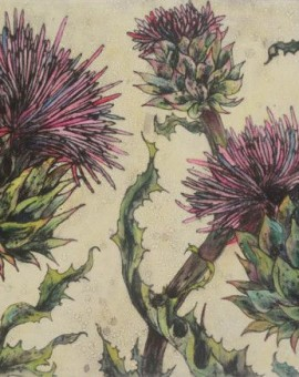 Spear Thistle - Vicky Oldfield - Wychwood Art