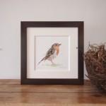 robin-framed