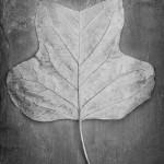 N11-leaf2