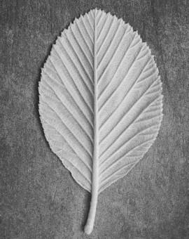 P5-leaf-1709d