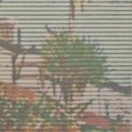 Trevor-Banthorpe-Palmhouse-7-Woodblock-print-60x45cm-£450- copy 3