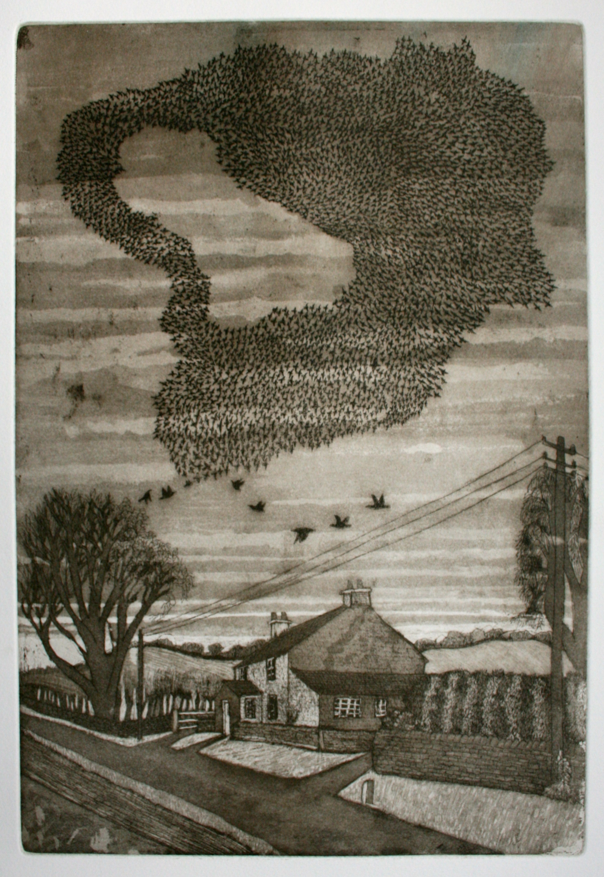 A murmuration in Gowland Lane