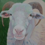 Margaret Crutchley  Only Ewe  Original Animal Portrait