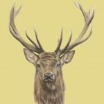 Deer Print Original painting illustration wall Art Waychood Art Yellow