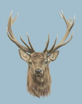 Deer Print Stag Woodland Wychwood Art Animal Roger Heaton blue
