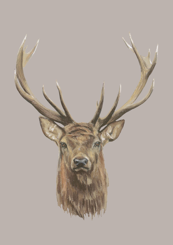 Deer Head Print Stag S Head Printmaking Pop Art