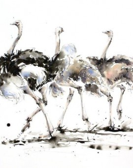 A Trio of Ostrich    (62cm x 44cm)    Watercolour & Ink   £1,150