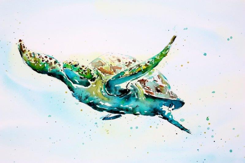 Green Turtle         (50cm x 70cm)   Watercolour & Ink   £1,750