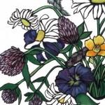 Wild-Flowers-570×700 copy