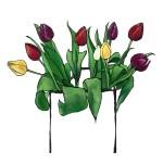 Mixed Tulips_16__x20___2
