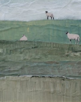Swaledale sheep on Sharpaw Hill