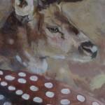 Kate Knott, Fallow Deer, Animal Art 3