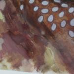 Kate Knott, Fallow Deer, Animal Art 4