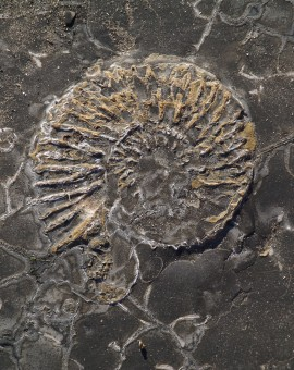 Fossils 2