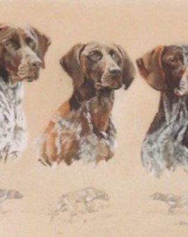 german_pointer_trio