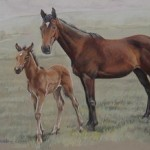 marefoal