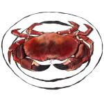 Crab_20x16