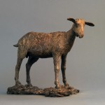 small goat_0003