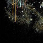 Carne-Griffiths-By-The-Night-Wychwood-Art copy