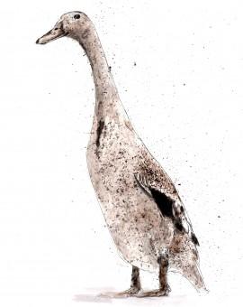duck1 low res lighter