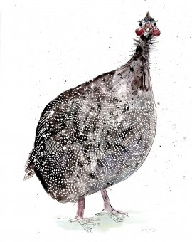 guineafowl low res lighter