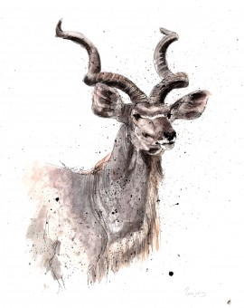kudu low res lighter