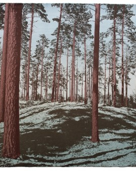 Anna Harley Skogen screen prints