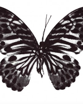 Clare Robinson Aubergine Butterfly Wychwood Art