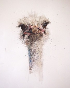 zaza-shelley-ostrich-1-wychwood-art