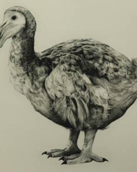 ronaldos dodo tammy mackay