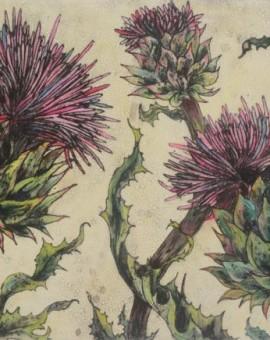 Spear Thistle - Vicky Oldfield - Wychwood Art