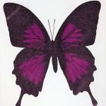 Aubergine Butterfly – WychwoodArt