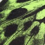 Claire Robinson, Green Butterfly, Silkscreen Print