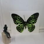 Claire Robinson, Green Butterfly, Silkscreen Print 5