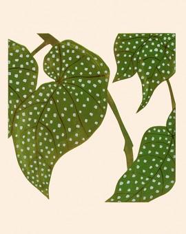 Elephant-Ears-Begonia