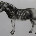 Tammy Mackay – Zebra – WychwoodArt