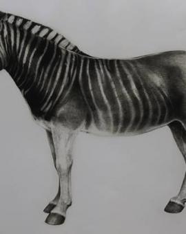 Tammy Mackay - Zebra - WychwoodArt