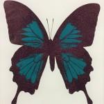 Teal Butterfly – WychwoodArt