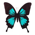 Turquoise Butterfly – WychwoodArt