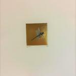 Guy Allen Drangonfly Wychwood Art (2)