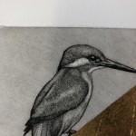 Guy Allen, Kingfisher II, Etching, Animal Art 2