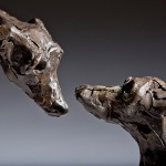 Jane Shaw : Dominance II : Pair of Lurchers : Bronze animal sculpture : dogs : greyhounds :8