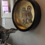 Barn Owls - Sally Ann Johns