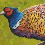 Pheasant-Splendour-Paul Bartlett-Wychwood-Art-Animal-Art