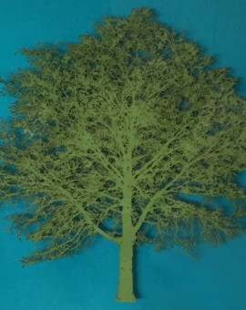 Emma Levine - Green Oak Tree - Wychwood Art